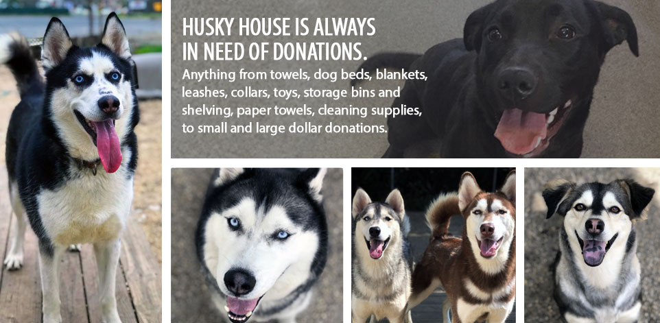 Husky House is always in need of donations. Anything from towels, dog beds, blankets,                 leashes and collars, toys, storage bins and shelving, paper towels, cleaning supplies,                 to small and large dollar donations.