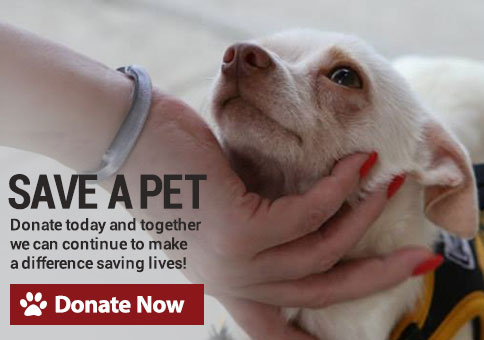 Save A Pet. Donate Today And Together We Can Continue To Make A Difference  Saving ...
