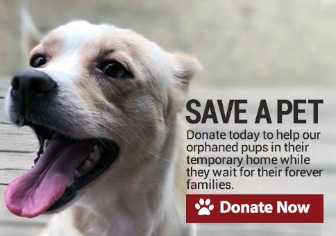 Save a pet. Donate today and together we can continue to make a difference saving lives! Donate Now!